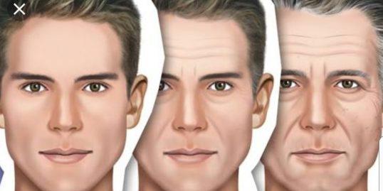 fases-envelhecimento